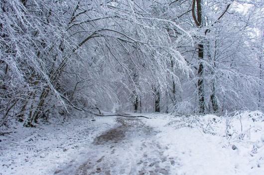 Parallel zur Altenberger Dom Straße verläuft ein Pfad durch den Wald.