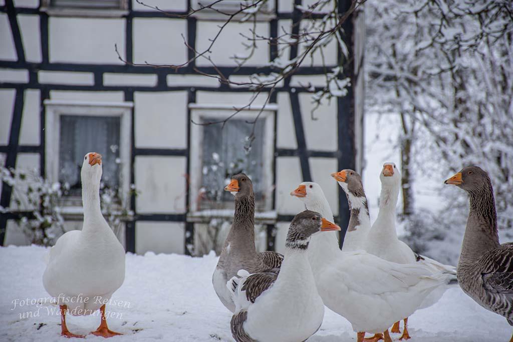 L´OMMER JON – Winter in LindlarGänsewache (1)
