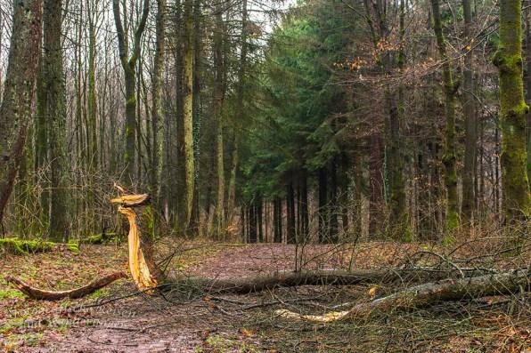 Pilgerpfad und Heerweg (43)