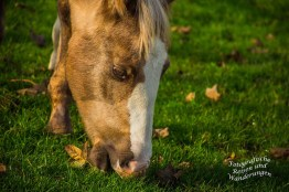 Die Pferde des Wiebertshof finden noch reichlich frisches Gras