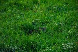 Eine junge Katze duckt sich in das frische Gras