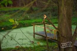 Grüner Tümpel - Hachz, ich liebe solche Idyllen