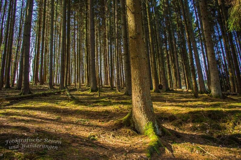 Helle Waldflächen