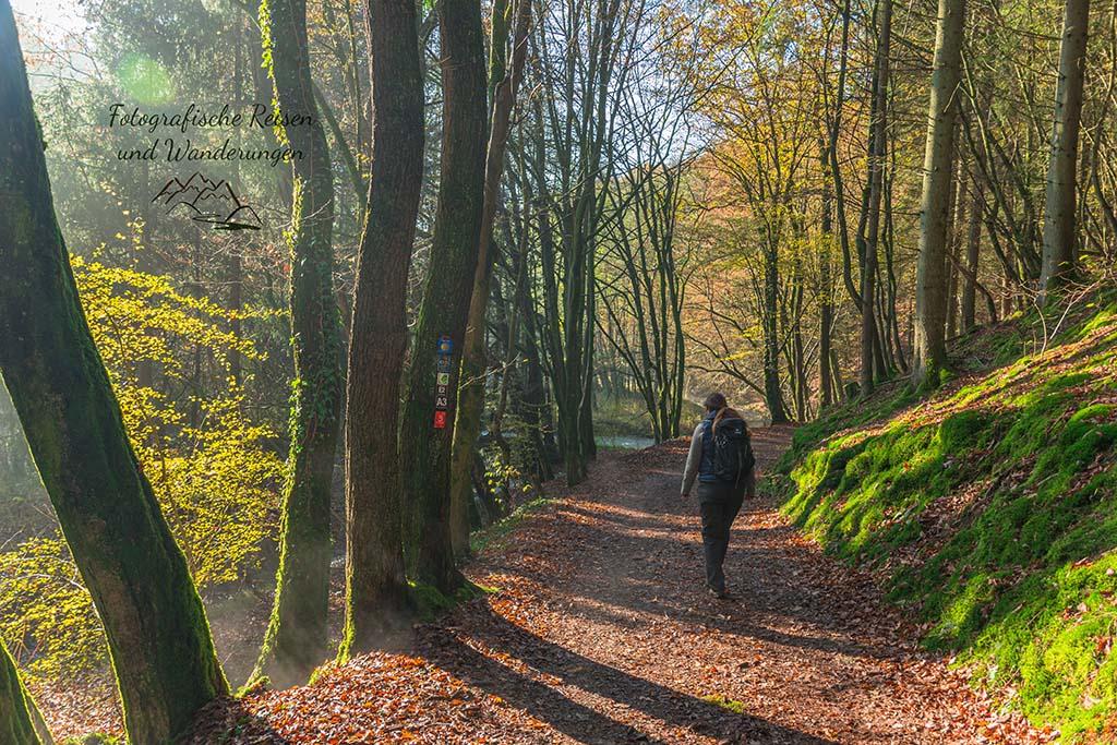 Herbst auf dem Burscheider Schluchtenpfad