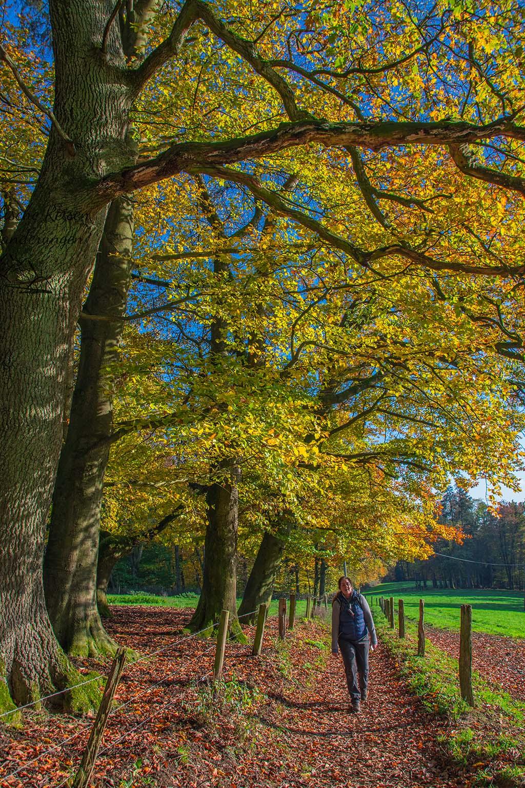 Burscheider Schluchtenpfad - Herbst