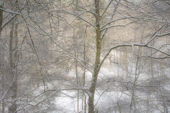 Winterliches Gespinst