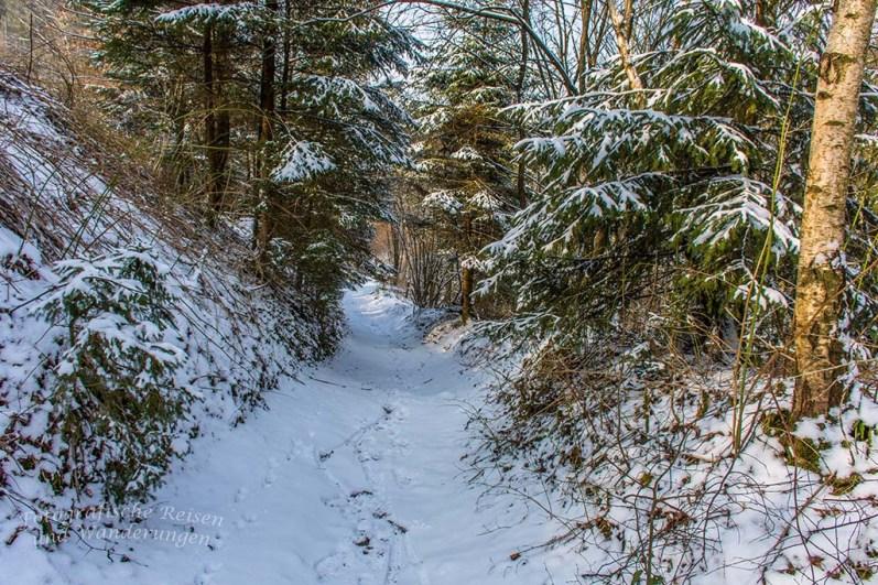 Weg hinunter zum Eifgenbach