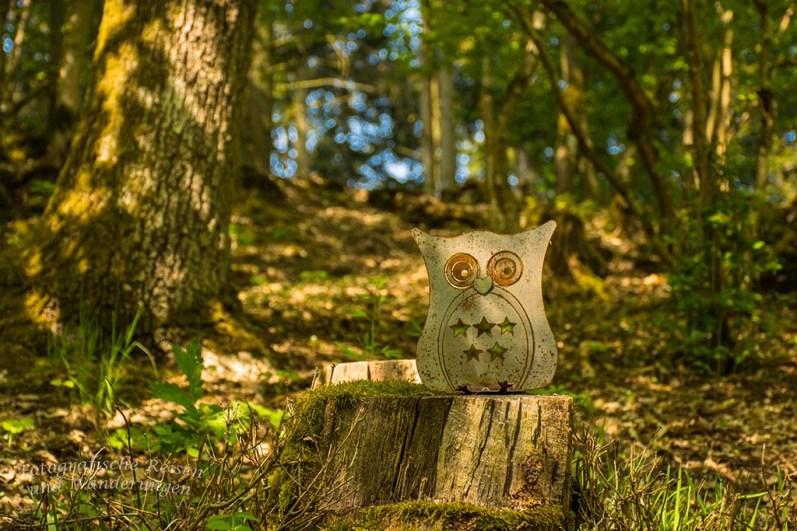 Eine Eule steht im Walde ganz still und stumm