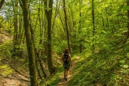 Auf herrlichen Waldwegen gen Wilhelmshöhe wandern
