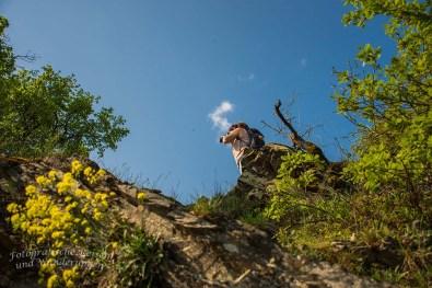 Tanja guckt vom Felsen