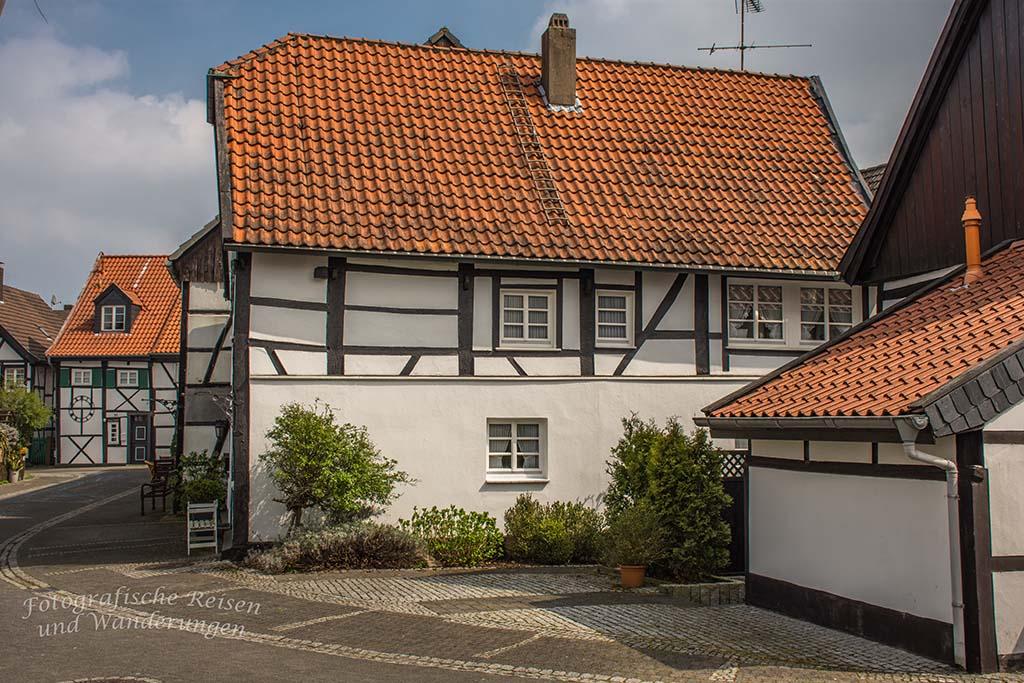 Westerholt Schloss und Wald (209)