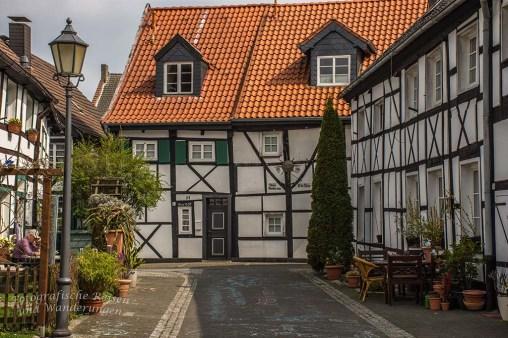 Westerholt Schloss und Wald (212)