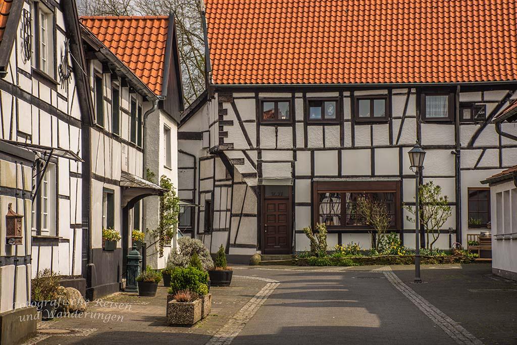 Westerholt Schloss und Wald (221)
