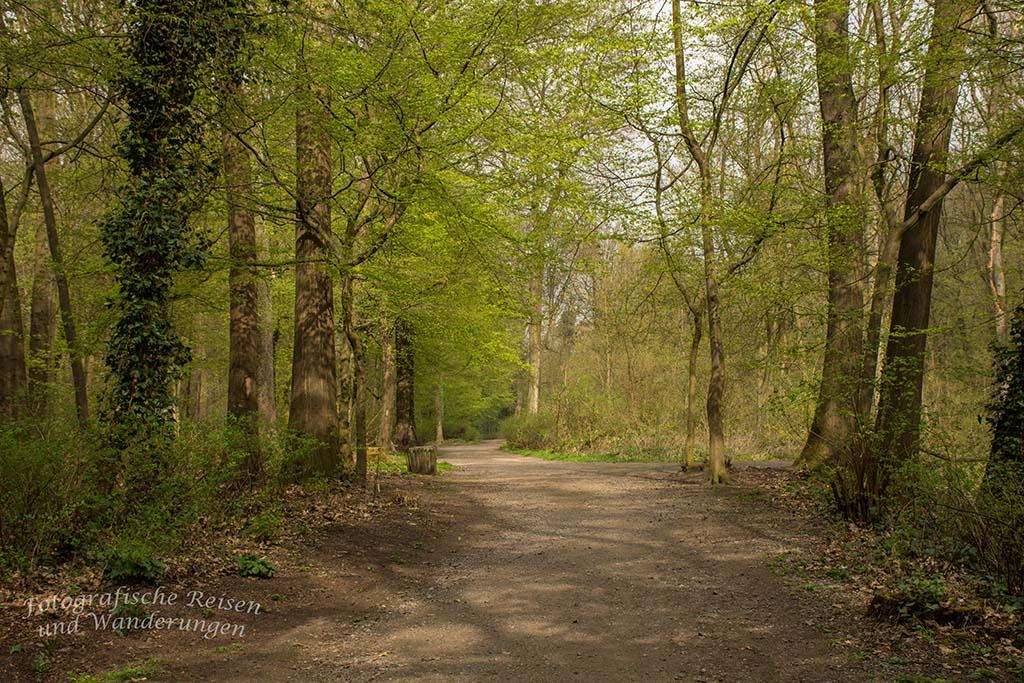 Sonnen beleuchteter Waldweg