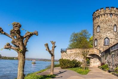 Zwischen Schloss Engers und Steinsee (14)