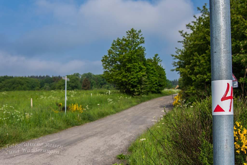 Spessart in der Eifel - Grün und bunte Blumen