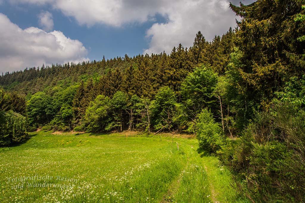 Spessart in der Eifel - Blick auf Wald und Wiese