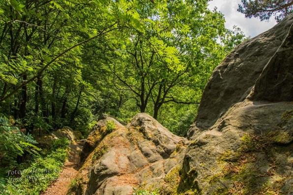 Tecklenburger Bergpfad (104)