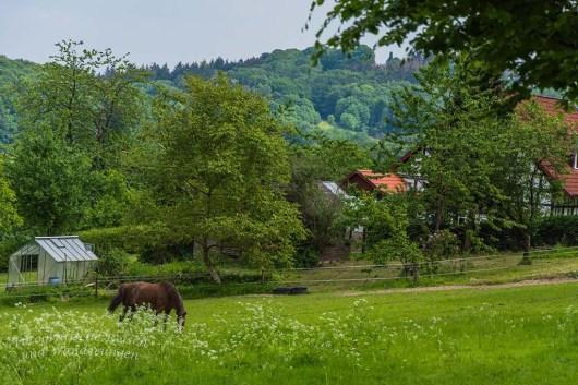 Tecklenburger Bergpfad (161)