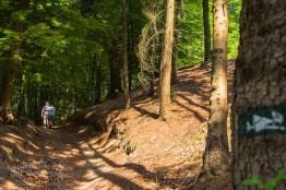 Hohlweg - Tecklenburger Bergpfad