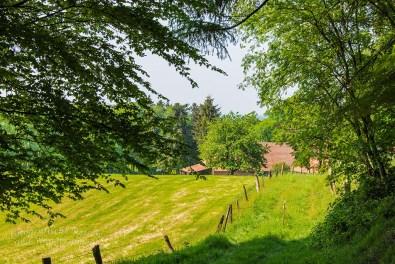Tecklenburger Bergpfad (18)