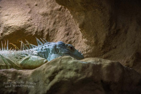 Zoo Neuwied Exatorium
