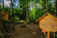 Waldwichtel