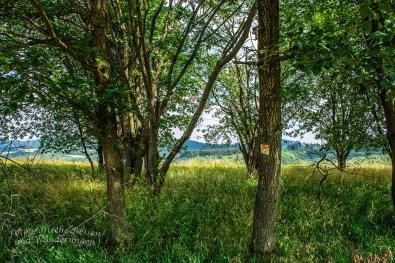 Hohe Wiesen und knorrige Bäume, ich liebe es