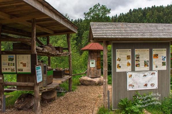 Wolf-und Baerenpark (29)