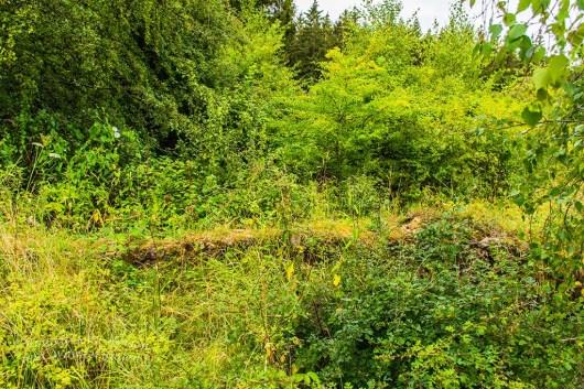Ruine des Oberhof