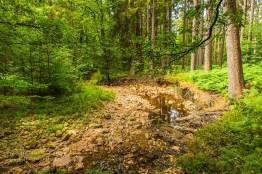 Demnächst wird hoffentlich wieder Wasser im Steinbach fließen