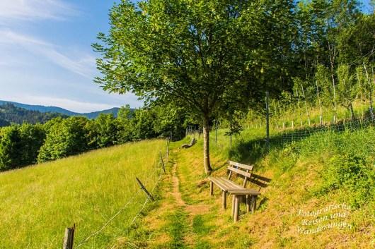 Der Schwarzwaldsteig (18)