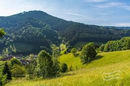 Der Schwarzwaldsteig (19)