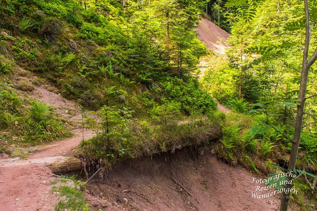 Ibacher Schliff - Der Schwarzwaldsteig