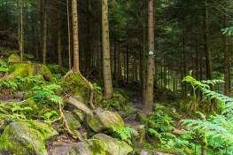 Der Wald wird dunkler und noch spannender