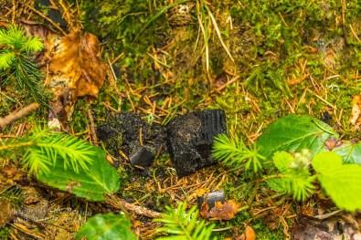 Gefunden: Kohle an einem alten Kohlenmeiler
