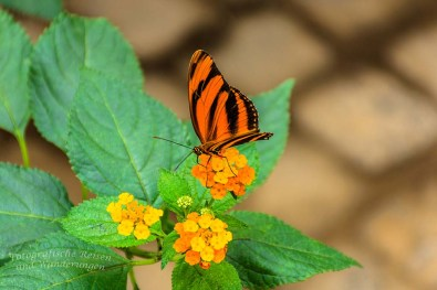 Schmetterlingsgarten Sayn (13)
