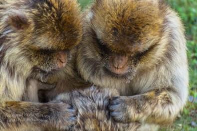 Affen und Vogelpark Eckenhagen (235)