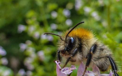 Statement für Bienen-Hummeln-Wespen und Hornissen