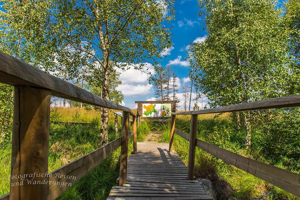 Im Hohen Venn wandern - Steg und Brücke