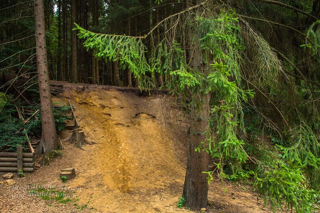 Sandige Böden im Aachener Wald