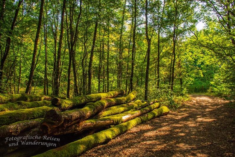 Wahner Heide - Eilerberg Tour (41)