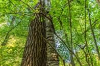 Die beiden Bäume verursachen ein regelmäßiges Knarzen. Es hört sich an, als würden sie sich unterhalten