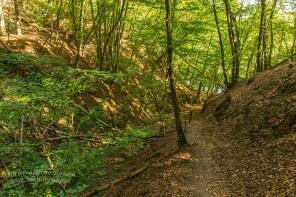 Biber Bäche Eifelwälder(T1) (80)