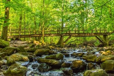 Brücke am Ende des Waldpfades oberhalb der Holzbachschlucht