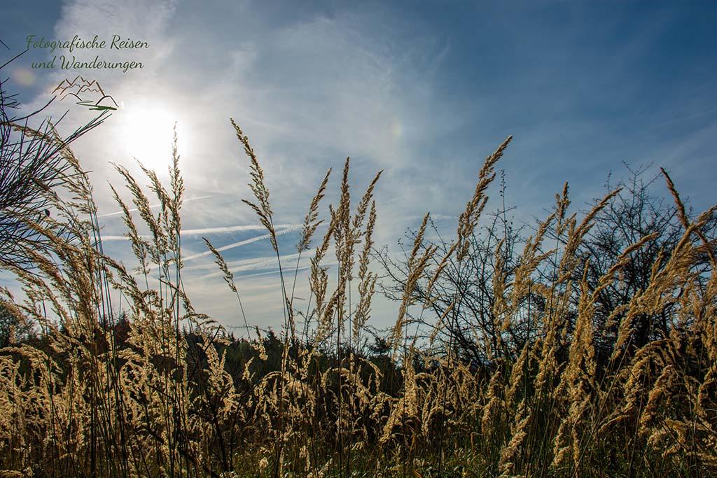 Die feinen Gräser ragen in den Himmel