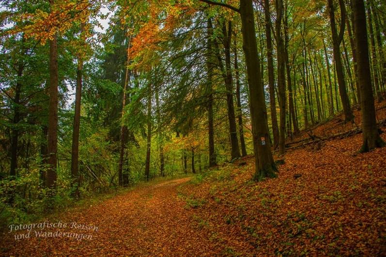 Bunter Herbstwald