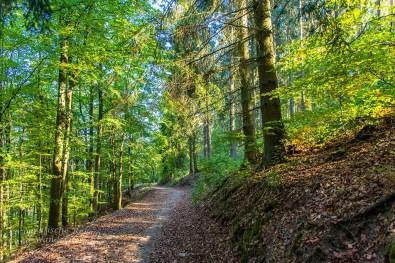 Herrliche Waldwege im Schlussakkord