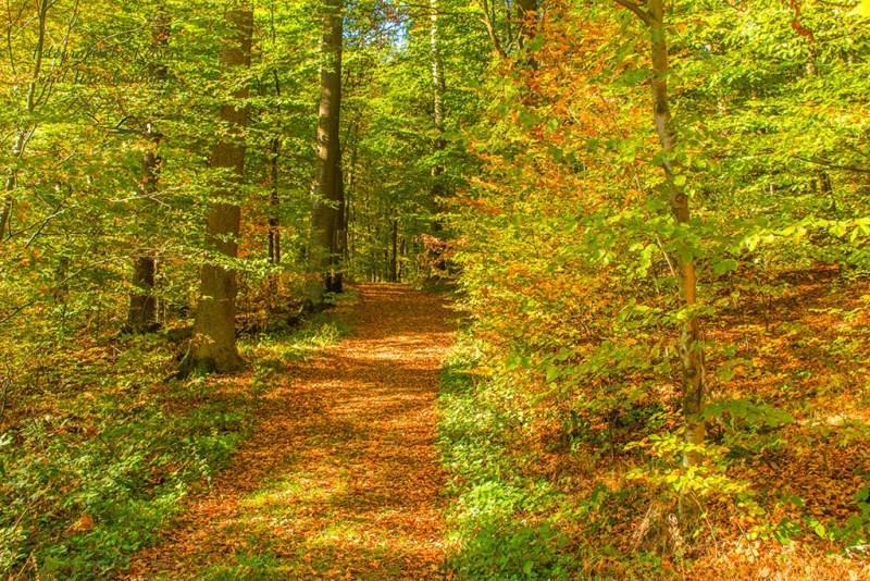 Dicke Laubteppiche auf dem Waldweg - Keltenrundweg Steineberger Ley