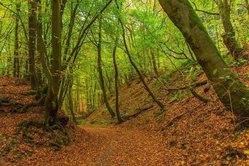 Waldwege Etrringen